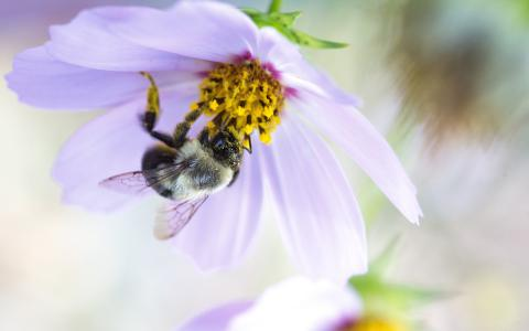 Image of a bee on a flower