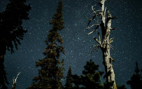 Image of trees and stars