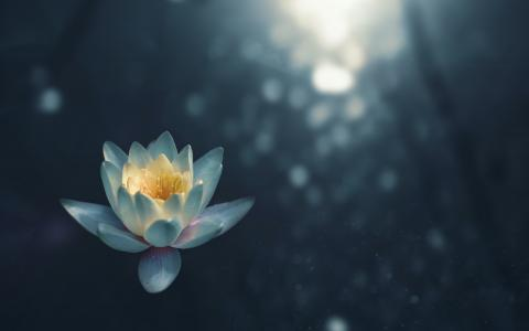 Image of a lotus flower on water